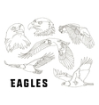 Set of eagles vector image vector image