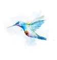 Watercolor colibri bird vector image vector image