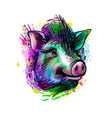 portrait of a pig head chinese zodiac sign year vector image vector image
