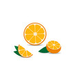 set of orange in flat design with shadow orange vector image